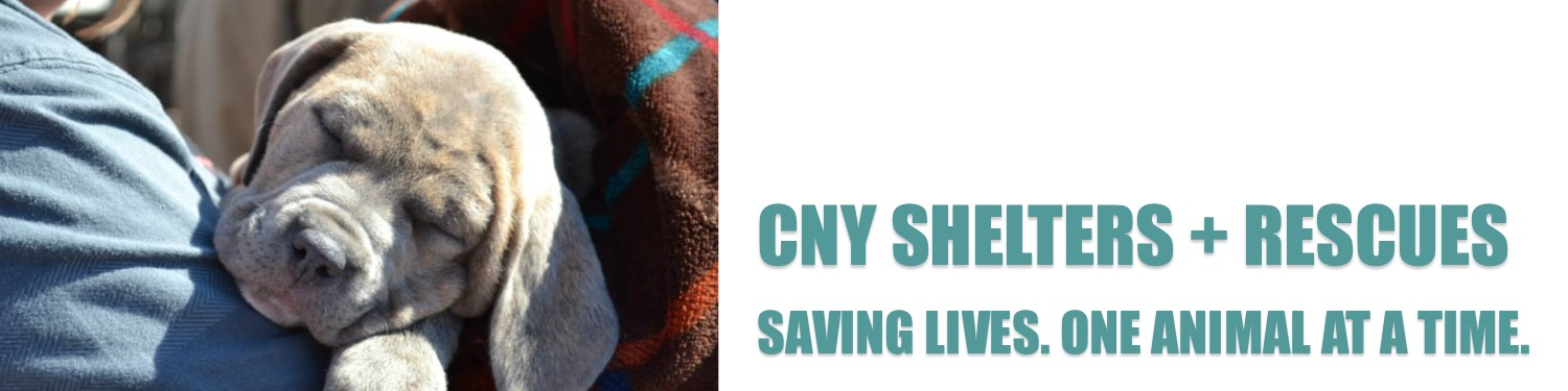 CPC Shelters Rescues