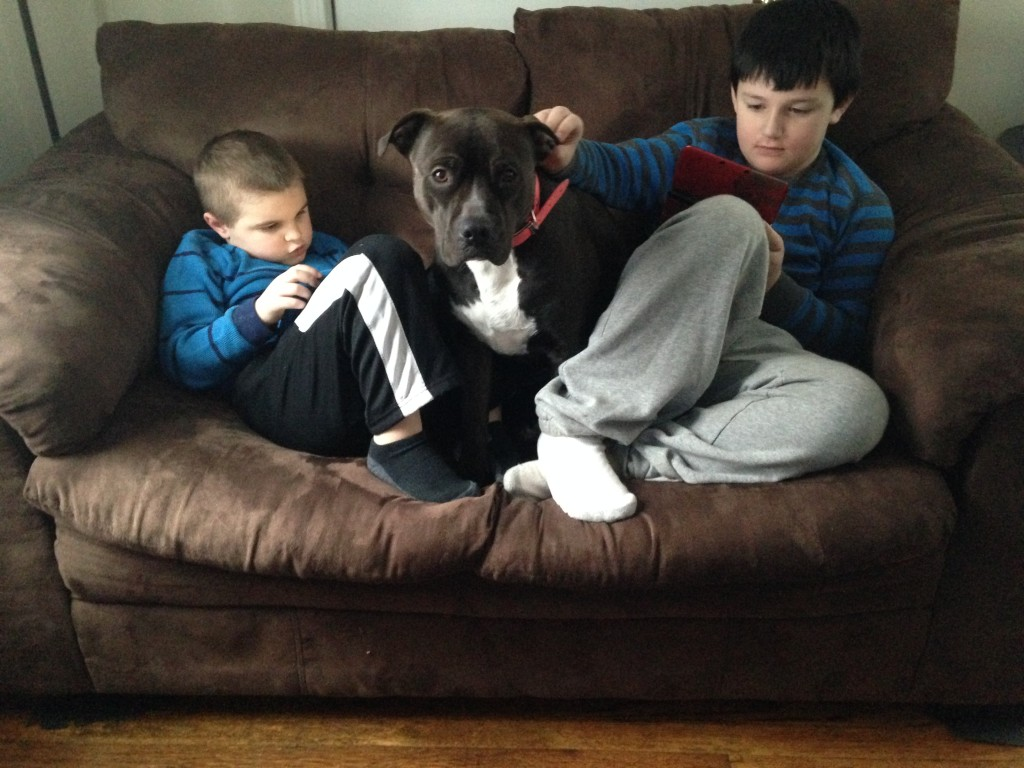 pit bulls and kids get along great!
